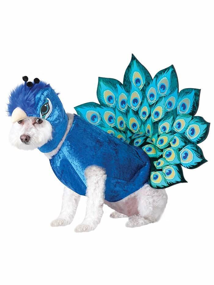 Animal Planet Multicolor Peacock Dog Costume