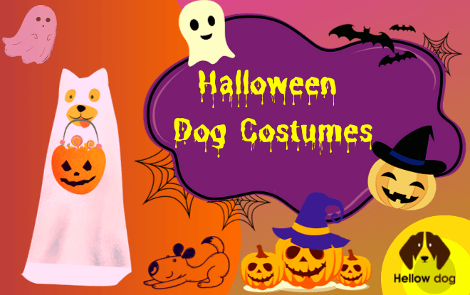 Best Halloween Dog Costume Ideas – 2019