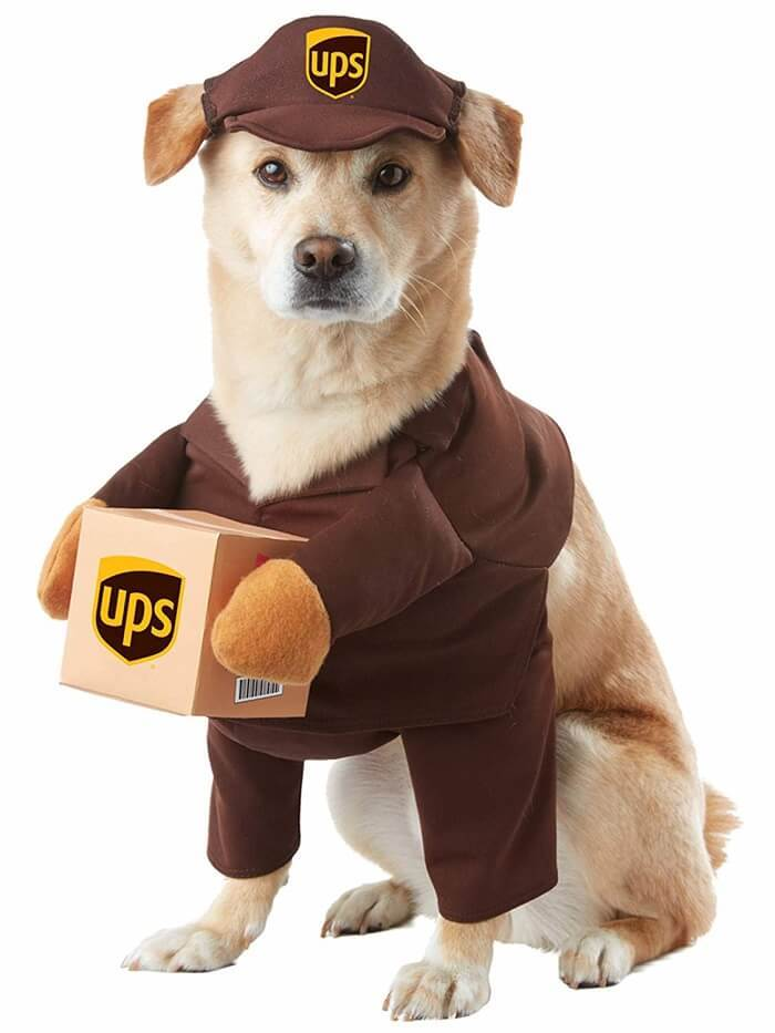 California UPS Pal Dog Costume