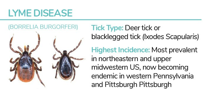 Dog Tick Type - Deer tick or blacklegged tick