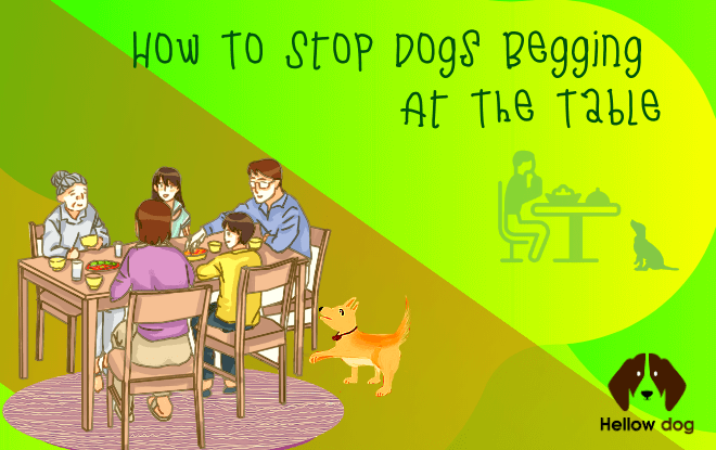 Dog Training:How To Stop Dogs Begging At The Table
