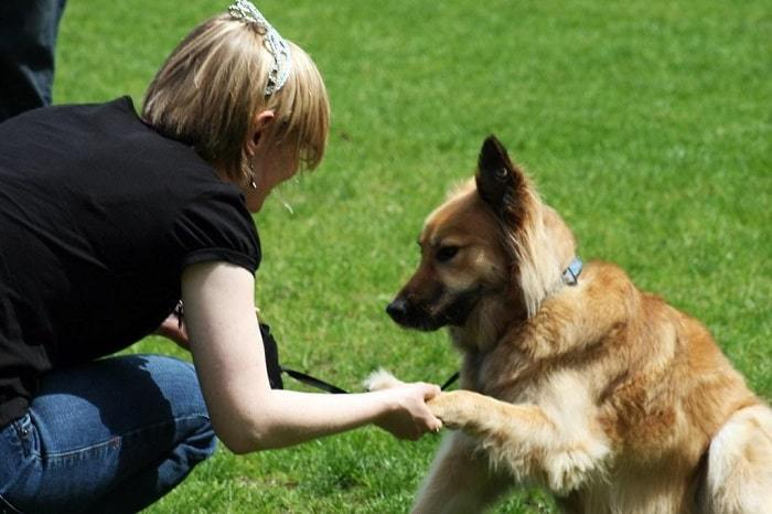 Handshaking with a dog-min