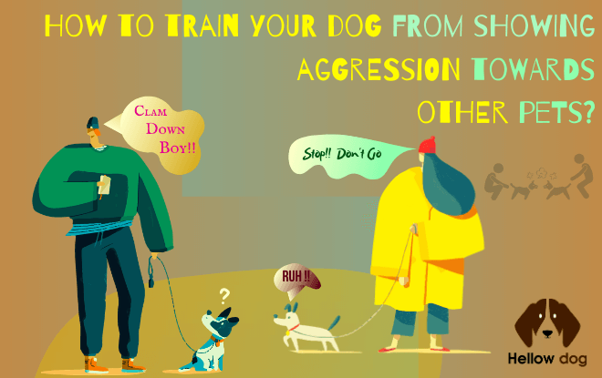 How to train your dog from showing aggression towards other pets