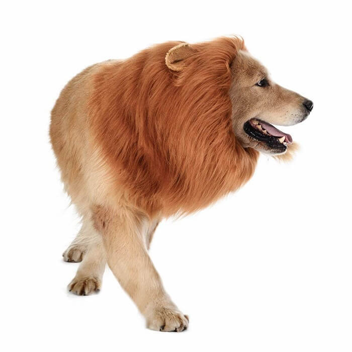 TOMSENN Dog Lion Mane Dog Costume
