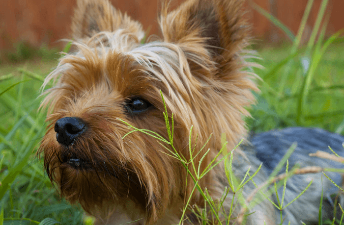 Dog Skin Problems Due to Allergy