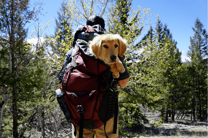 Hiking A Mountain With Your Dog