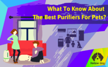 What To Know About The Best Air Purifiers For Pets