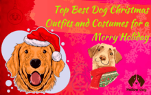 best dog Christmas Outfits
