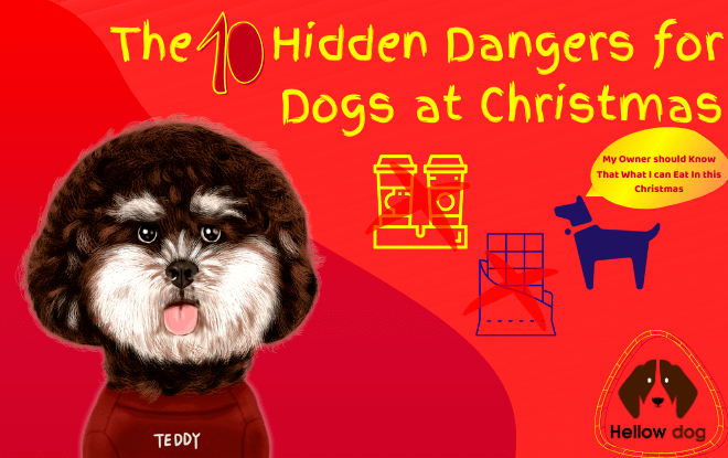 10 Hidden Dangers for Dogs at Christmas