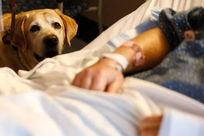 Therapy dogs in hospitals