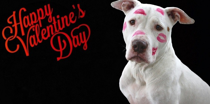 How Your Valentines's Day Can Be Enjoyable for Your Dog