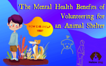 The Mental Health Benefits of Volunteering for an Animal Shelter