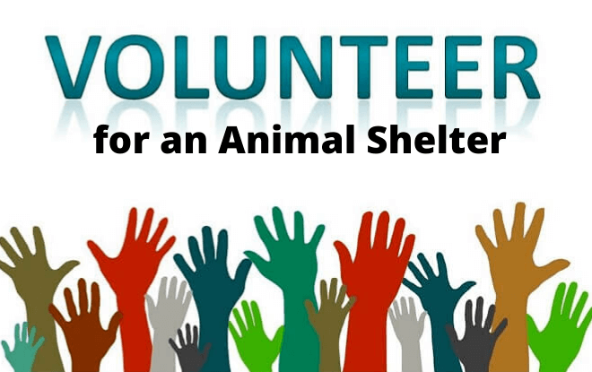 Volunteering for an Animal Shelter