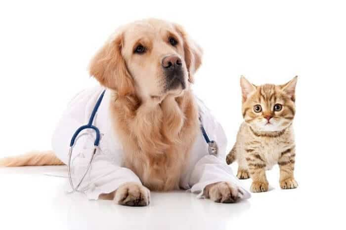 Your pet needs Professional care