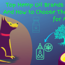 7 Top Hemp Oil Brands in 2020 and How to Choose the Best for My Dog
