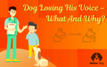 Dog Losing His Voice – What and Why