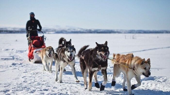 Husky riding in Norway