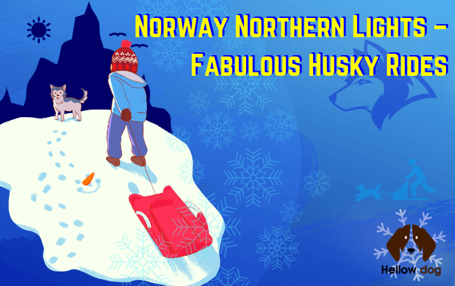 Norway Northern Lights - Fabulous Husky Rides