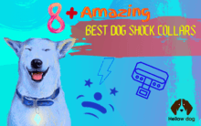Best Dog Shock Collars