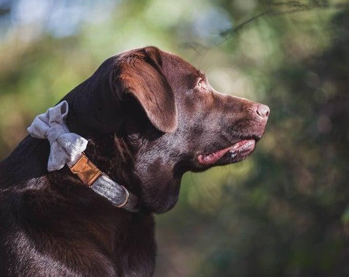 Dog collars is an essential in the process of taking care of a dog