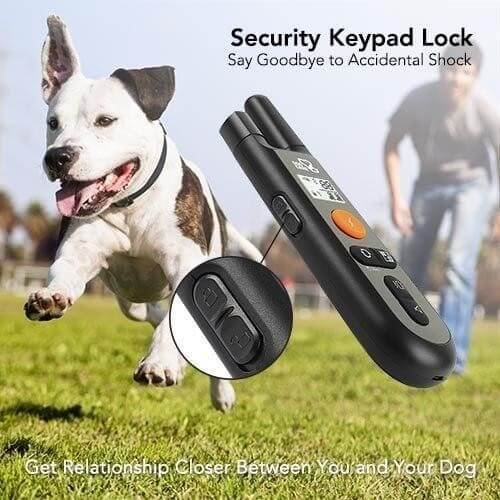 Dog training collar - the best item to teach your pet