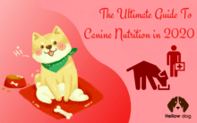 The Ultimate Guide to Canine Nutrition in 2020