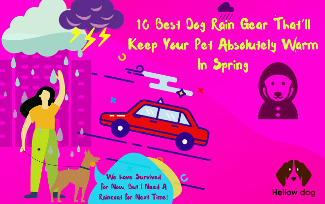 10 Best Dog Rain Gear That'll Keep Your Pet Absolutely Warm In Spring