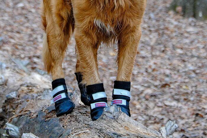 Dog shoes and many things you need to know