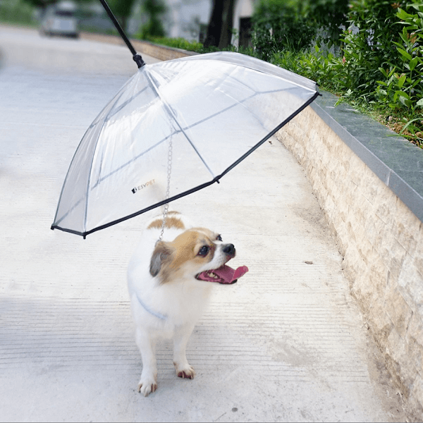 LesyPet Dog Umbrella with Leash