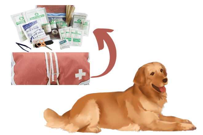 Pet First-Aid is essential in the process of taking care of dogs