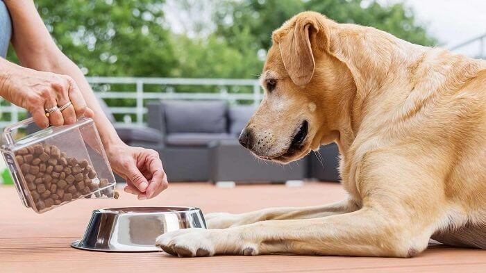 Use food bowl to feed your dog
