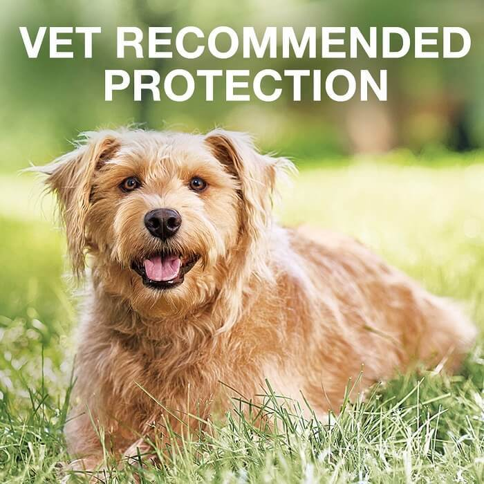 Vet recommends effective flea treatments for dogs
