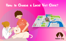 How to Choose a Local Vet Clinic