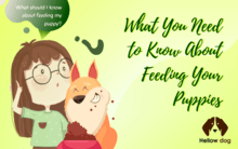 What You Need to Know About Feeding Your Puppies