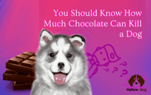 You Should Know How Much Chocolate Can Kill a Dog