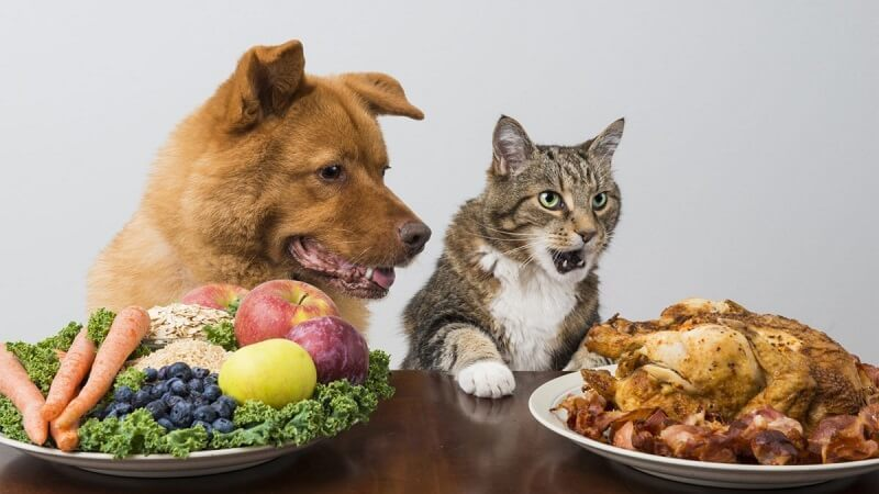 You should sometimes prepare food for your hairy friend by yourself