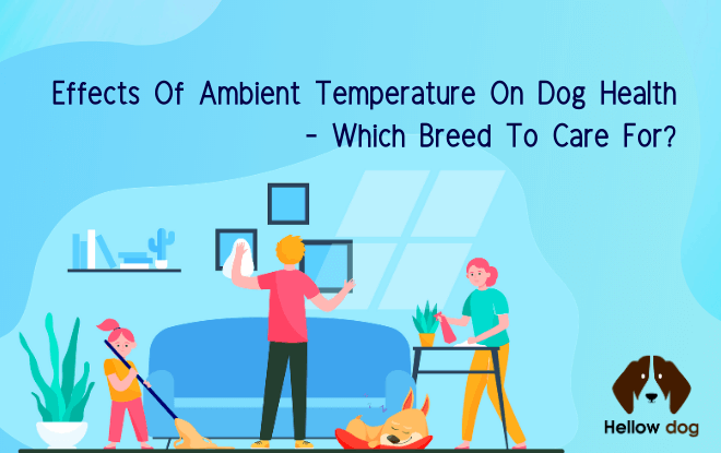 Ambient Temperature Effects on a Dog's Well Being - Which Breeds Care
