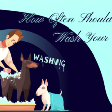 How Often Should You Wash Your Dog