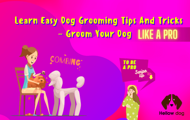 Learn Easy Dog Grooming Tips and Tricks – Groom Your Dog Like a Pro