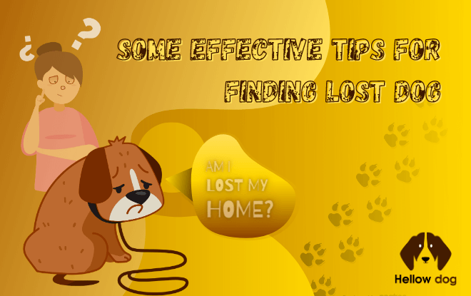 Some Effective Tips for Finding Lost Dog