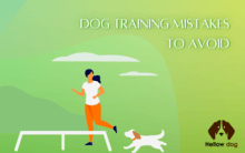 Dog Training Mistakes to Avoid