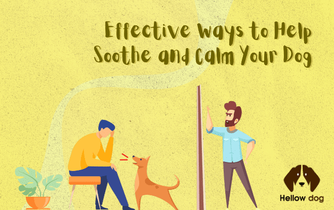 Effective Ways to Help Soothe and Calm Your Dog