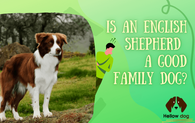 IS AN ENGLISH SHEPHERD A GOOD FAMILY DOG