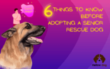 Six Things to Know Before Adopting a Senior Rescue Dog