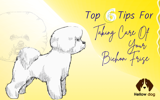 Top 6 Tips for Taking Care of Your Bichon Frise