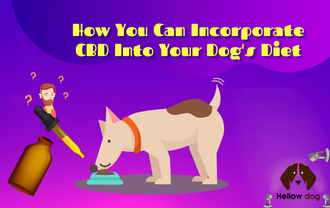 How You Can Incorporate CBD Into Your Dog's Diet