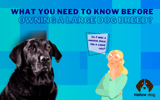 What You Need to Know Before Owning A Large Dog Breed