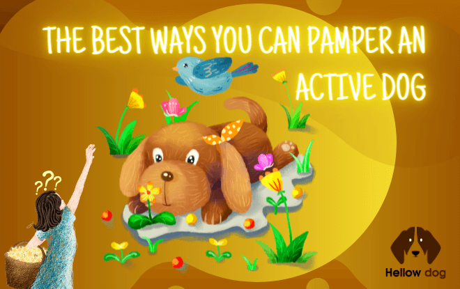 The Best Ways You Can Pamper an Active Dog