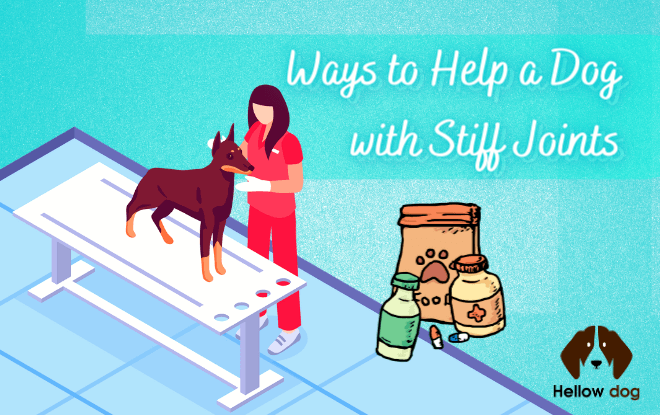Ways to Help a Dog with Stiff Joints