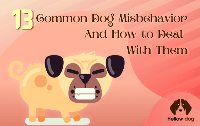 13 Common Dog Misbehavior and How to Deal with Them